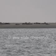 Borkumer Seehundbank (2781)