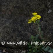 Steingarten_0495