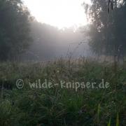 Morgenstimmung Sunder (9449)