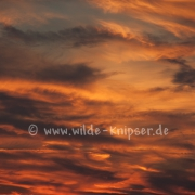 Wolken (1302)